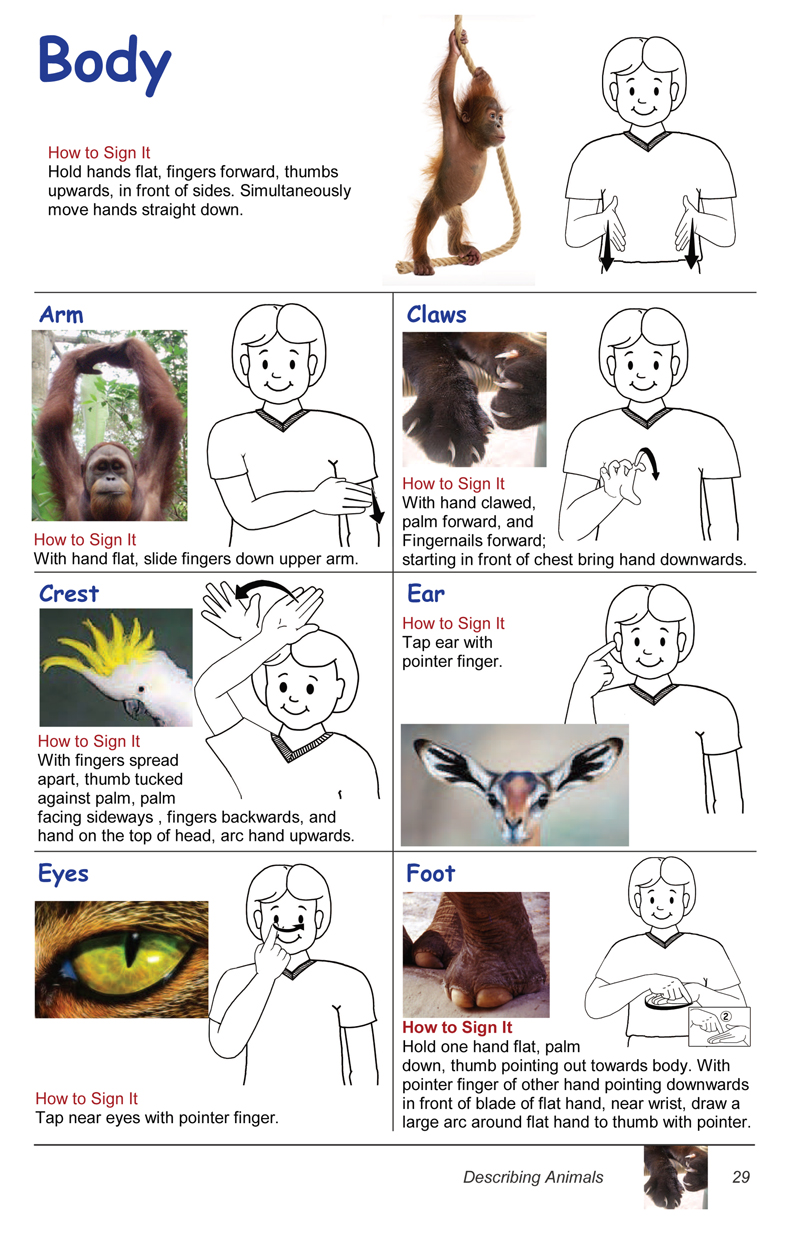 photo regarding Baby Sign Language Australia Free Printable Chart referred to as Auslan Childrens Imagine Dictionaries